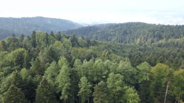 Nádherný Vzdušný záběr zelené kopce a údolí. Povaha Bukovské vrchy z ptačí perspektivy.