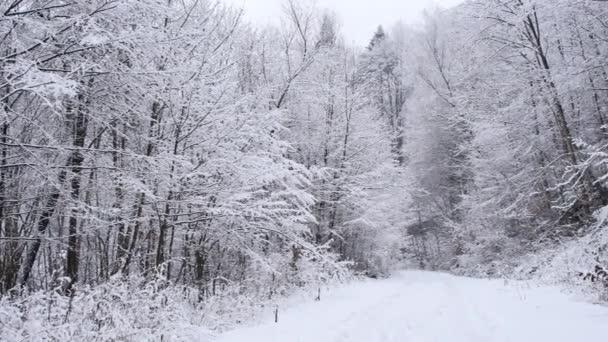 Silnice v lese pokrytá sněhem. Hladký kardanový záběr kamery pohybující se vpřed.