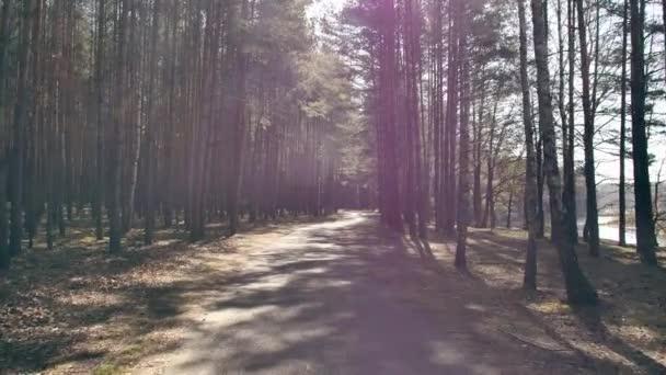 Pohled na záběry z procházky lesem. Slunečný den v lese.