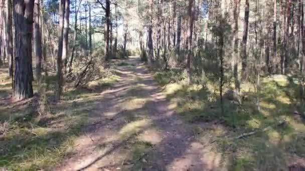 Nézőpont felvétel az erdőben tett sétáról. Napsütéses nap az erdőben.