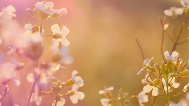 Krásná louka plná květin a bylin v teplém slunečním světle