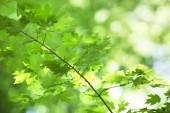 Zblízka pohled na svěží zelené listy
