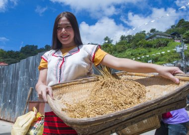 BANAUE, PHILIPPINES - April 30 : Woman from Ifugao Minority in a rice pounding competion during Imbayah festival in Banaue the Philippines on April 30 2018.