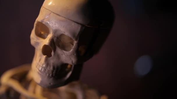 Model lidské kostry