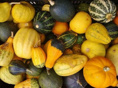 close up of Gourd fruits background