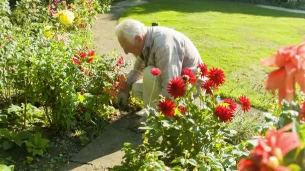 Odešel muž Senior kavkazských zahradnictví