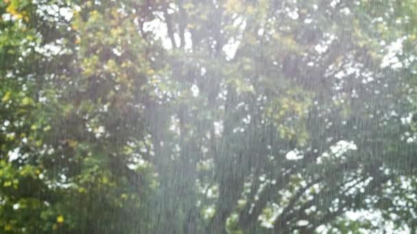 Pohled prudký déšť sprcha