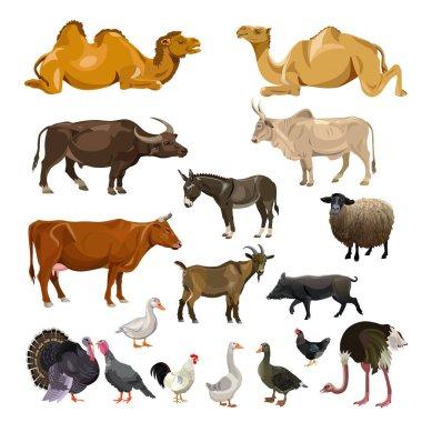Farm animals set. Vector illustration isolated on white background
