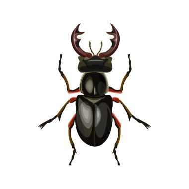 Stag beetle. Vector illustration isolated on white background