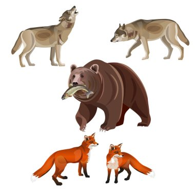Predatory beasts - brown bear, gray wolves and red foxes. Vector illustration on white background