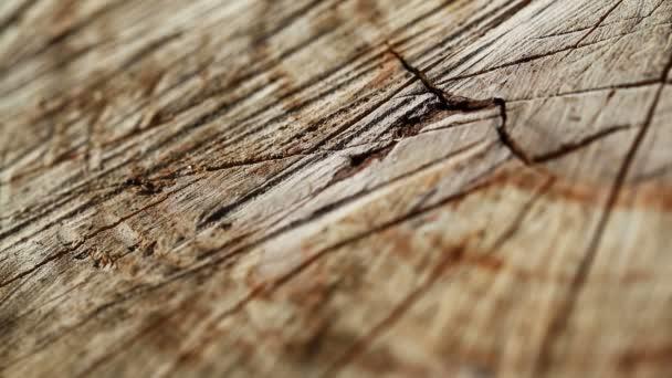 pohybující se mravenci zblízka, hmyz na divoké přírodě