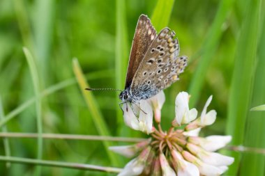 Nice blue butterfly sit on flower blossom, macro photo