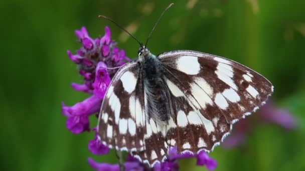 close up of spotted butterfly sitting on violet flower