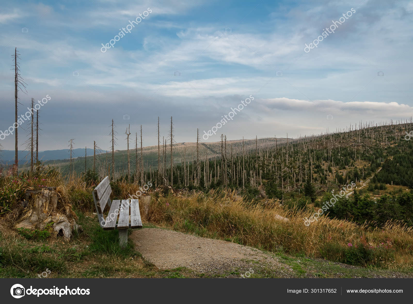 Prime Wood Bench On Lookout With Devasted Trees By Bark Beetle Ibusinesslaw Wood Chair Design Ideas Ibusinesslaworg