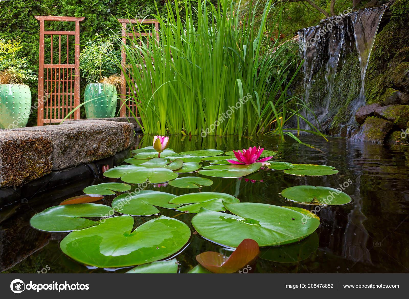 Estanque jard n patio con cascada lirios agua iris for Estanque de jardin con cascada