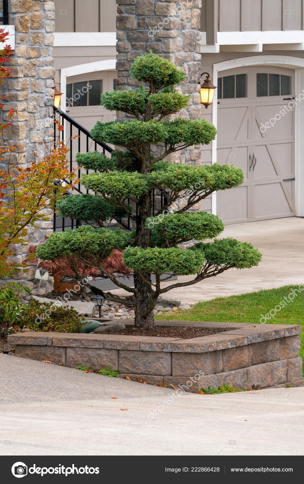 Formschnitt Baum Hochbeet Stutzmauer Der Vorgarten Luxus Haus