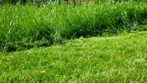 Gras In Tuin : Steegjes gras tuin stenen steentuin op tussen groeiende
