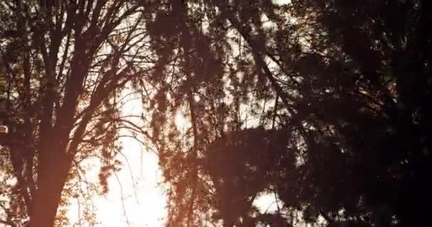 lesní stromy silueta při západu slunce obloha s paprsky sluneční erupce