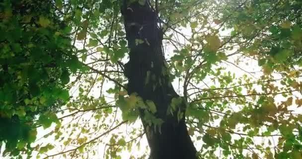 Waldbäume Silhouette und grüne Frühling Sommer Blätter bei Tageslicht Himmel mit Sonnenstrahlen fliegen durch den Wald auf die Natur