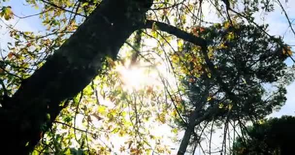 lesní stromy siluety na nebeském slunci s paprsky slunečních paprsků letící lesem na pozadí přírody, pojetí