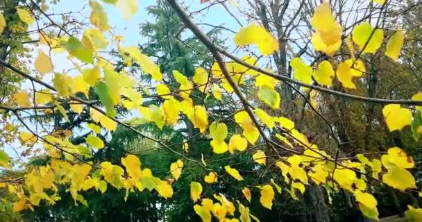 lesní stromy a barevné žluté podzimní listy na letní oblohu s odlesk paprsky létající lesem na pozadí přírody,