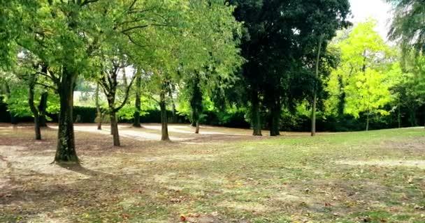lesní stromy a barvité žluté a zelené podzimní dovolené, které klesají na větrné a přírodní pozadí, pojetí přírody