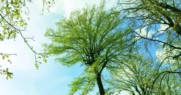 lesní stromy zelený jarní letní listí na denním nebi s paprsky slunečních paprsků letící lesem na pozadí přírody, koncepce přírodního prostředí