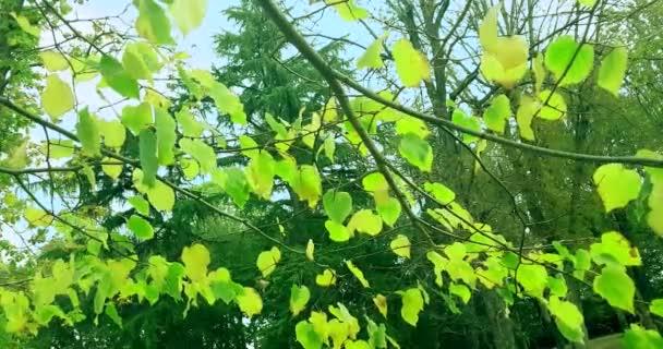 lesní stromy zelený jarní letní listí na denním nebi s paprsky slunečních paprsků letící lesem na pozadí přírody, koncepce
