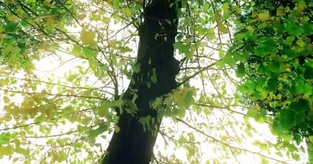 lesní stromy, silueta a zelená jaro léto odjíždí v
