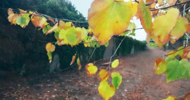 lesní stromy a barevné žluté a červené podzimní dovolené pádu
