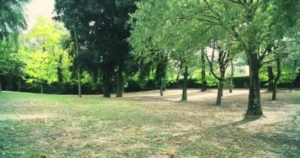 lesní stromy a zelené jarní letní listy