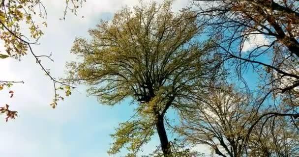 lesní stromy zelený jarní letní listí na denním nebi s paprsky slunečních paprsků letící lesem na přírodu