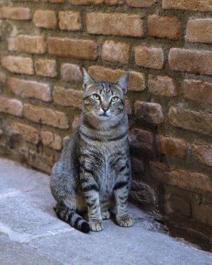 """Картина, постер, плакат, фотообои """"Кошка в Венеции"""", артикул 302470424"""