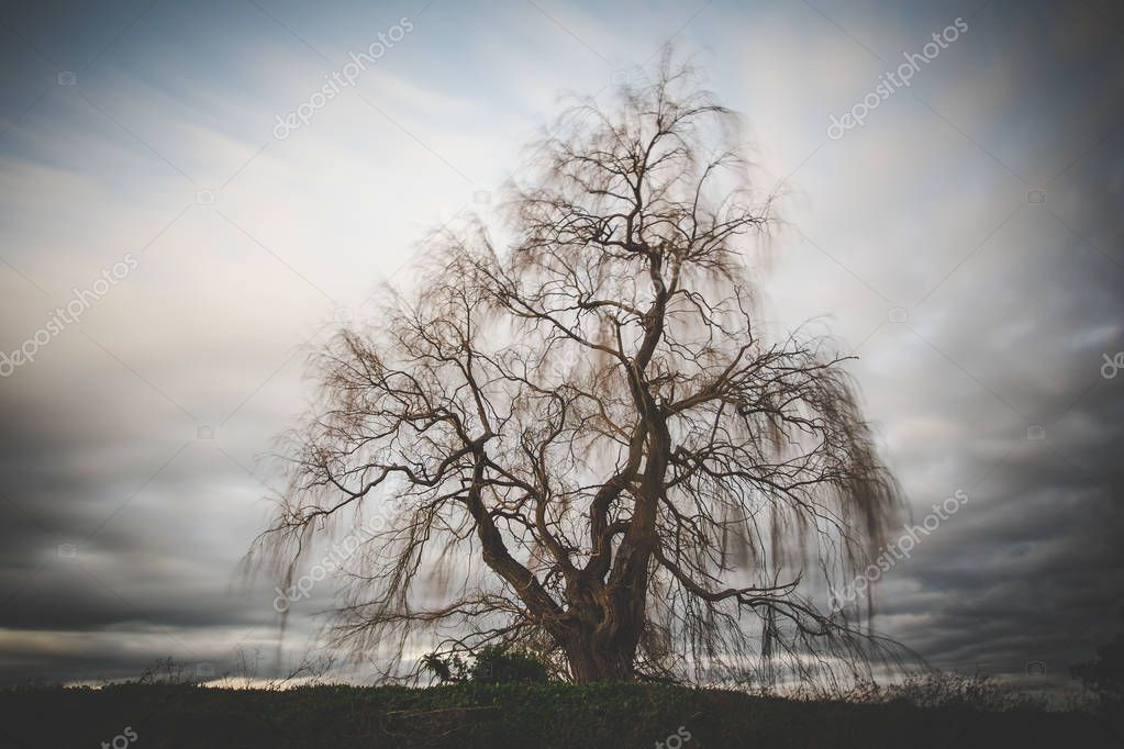 Long Exposure image over an old weeping willow tree