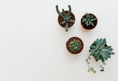 Flat lay summer composition. Creative concept succulents in pots. Top view, copy space