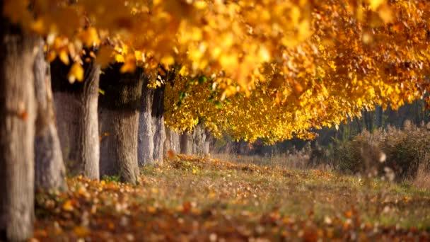 Krásy podzimní stromová alej, klidná příroda