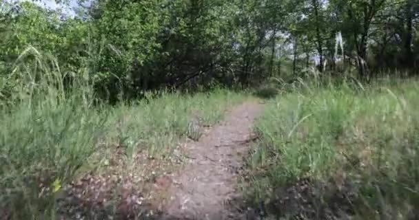 High grass and path