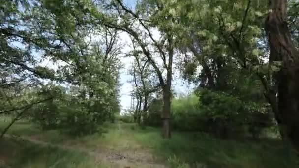 Strom kvetoucí akát