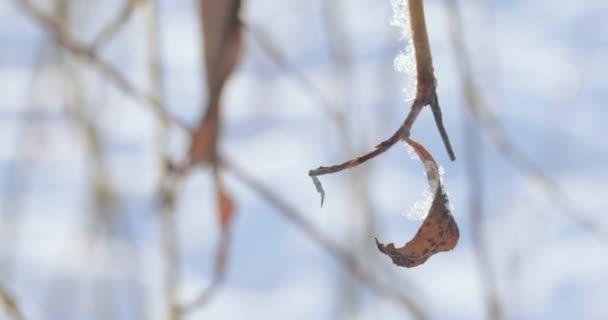 hó tartozó ágak
