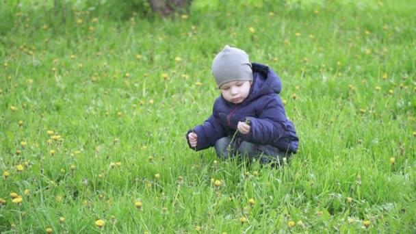Chlapec v čepici trhá pampelišky
