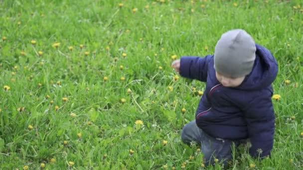 Junge mit Mütze reißt Löwenzahn