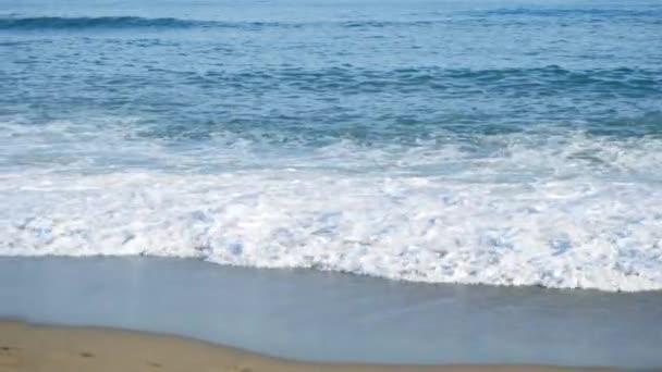Tropické moře s žlutým písečná pláž. V UK. Pes na pláži. Písečná pláž s vlnami moře za slunečného dne. Letní pozadí