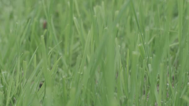 Perfect green background by the fresh grass. Stock. Natural green background
