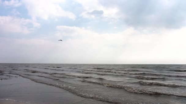 Coastline of sea with waves and flying bird in clouds. Video. Marine splash of waves on volcanic sand beach. Peaceful ocean coastline revealing big foaming waves washing the shore. Top scenery view of