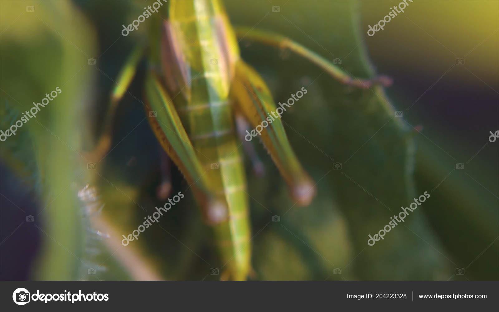 Insect macro spelen van licht en schaduw sprinkhaan achterop