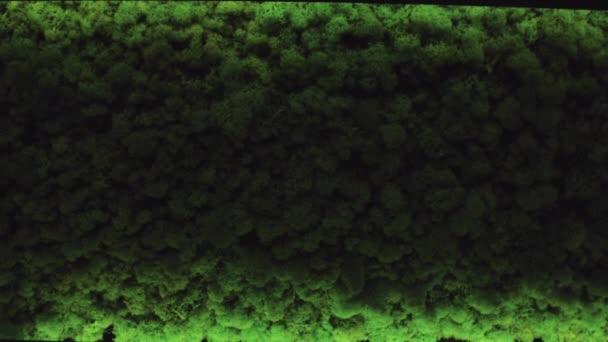 Zöld levelek textúra a háttér, kis levél. Zöld moha-háttér
