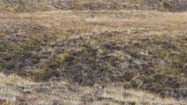 Krásná nízká pole trávy, dlouho makro záběr, zelená rostlina foukání větru s hloubkou pole, jarní louka, slunce svítilo, Video. Světlé glade s divoce rostoucí květiny, trávy a rosy. Detail