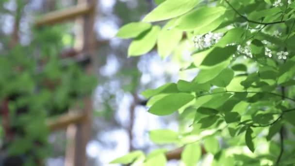 Zelené listy na pozadí. V UK. Zelené listí stromů v parku