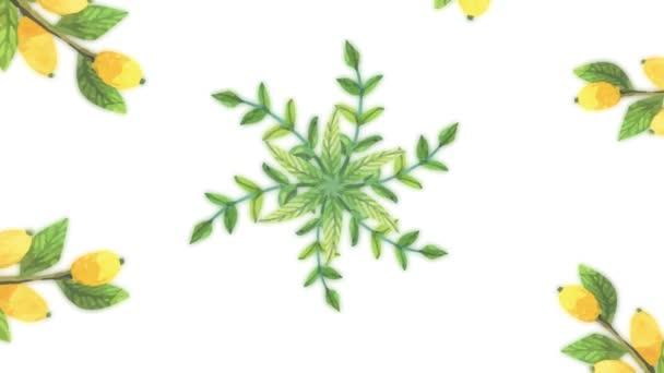 Animace z rostoucí květiny, kvetoucí květiny, květinové pozadí, Botanická vzor. Dekorativní přechod s květy rostoucí bolesti. rostoucí květiny rámec