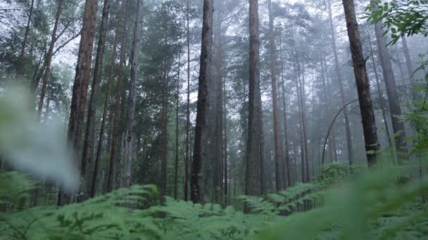 Incredibile foresta mistica con nebbia. Scena. Foresta nebbiosa di mistica